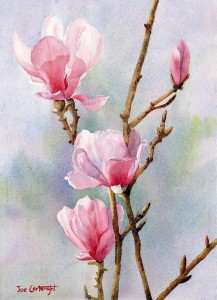 Flowers Pink Magnolias watercolour painting by Joe Cartwright